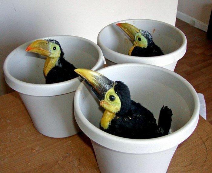 Туканы - чудо природы, но что мы знаем об этих птицах?