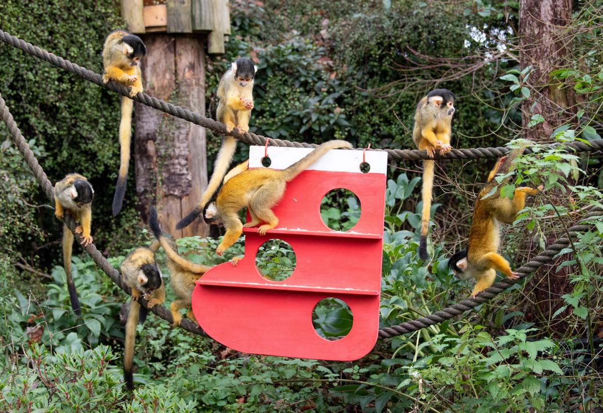 В Лондонском зоопарке животные уже получили рождественские подарки