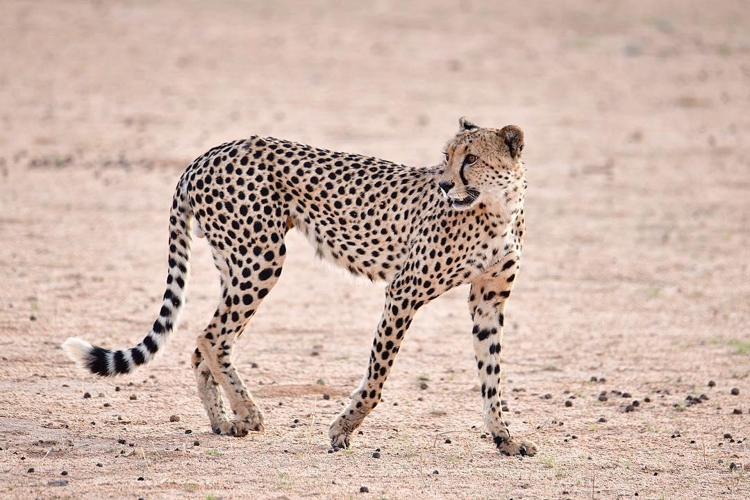 Африканские животные на снимках Стивена Довера