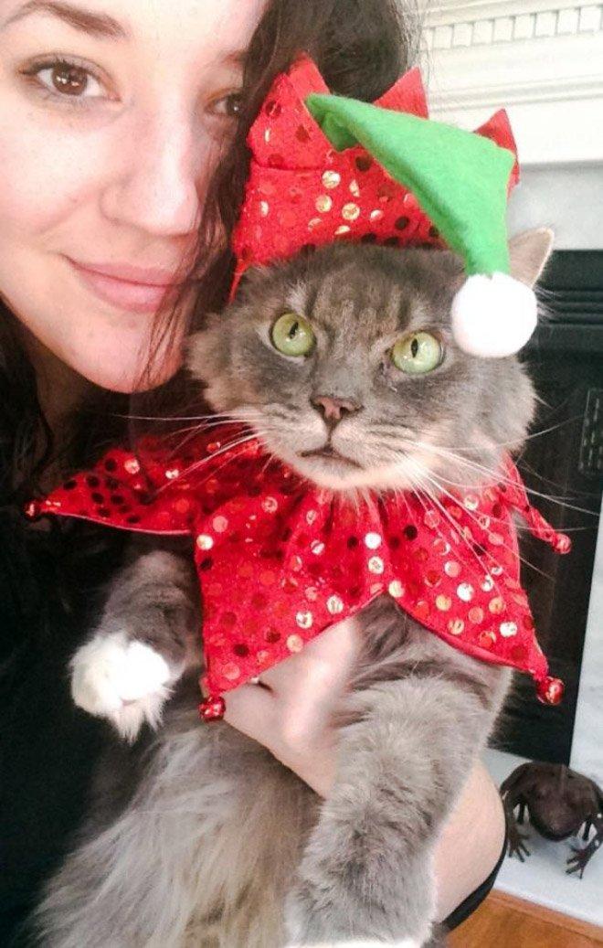 Домашние животные, которым явно не до новогоднего настроения