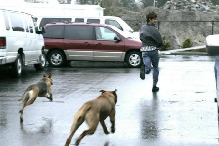 Как правильно вести себя при нападения собаки