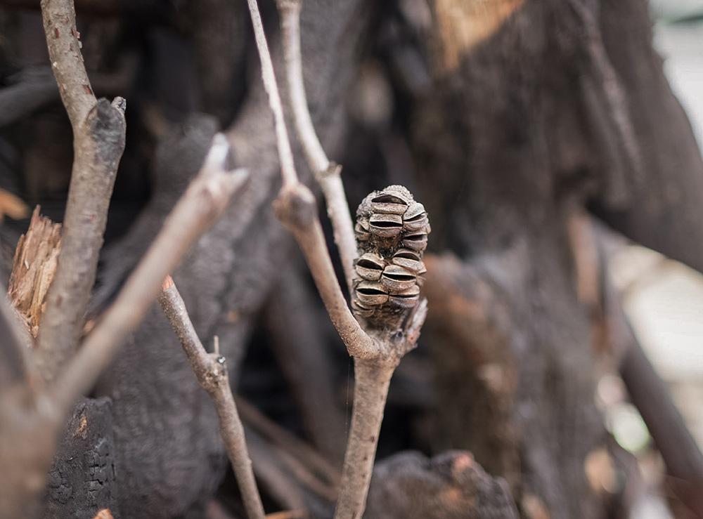 В Австралии установили ёлку из обгоревших веток