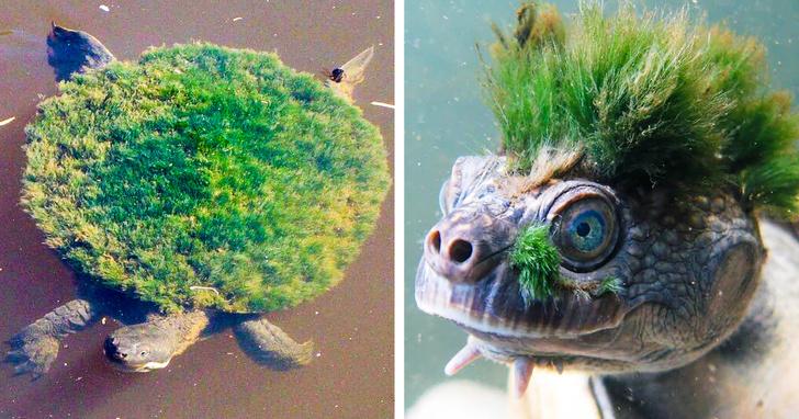 Занимательные факты о животном мире, которых нам не рассказывали в школе