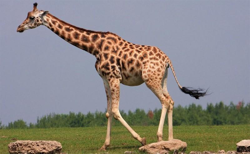 Животные с самым долгим периодом беременности