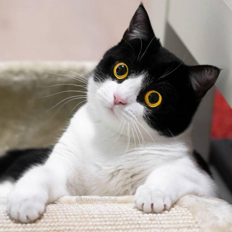 Кот Иззи покорил соцсети невероятными глазами