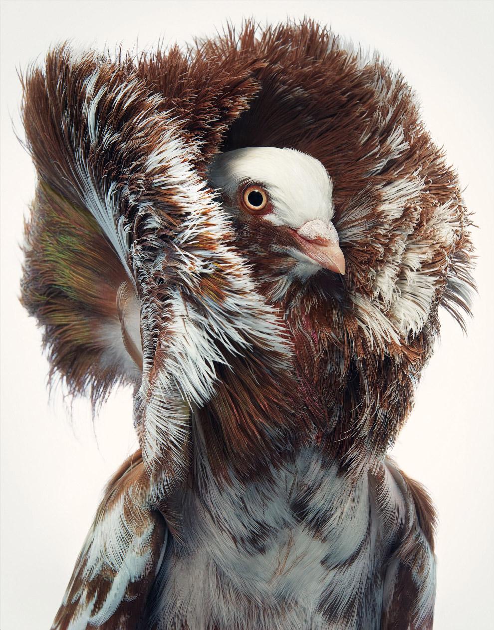Портреты красивых исчезающих птиц