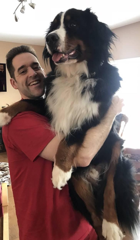 Просто огромные собаки гигантских пород