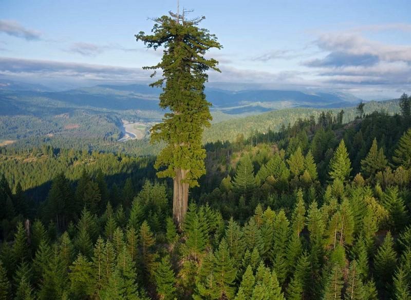 Интересные и удивительные факты о растениях