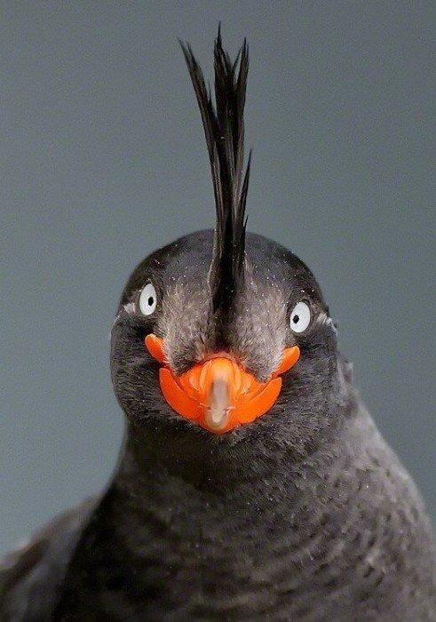 Портреты птиц, которые заглядывают прямо в душу