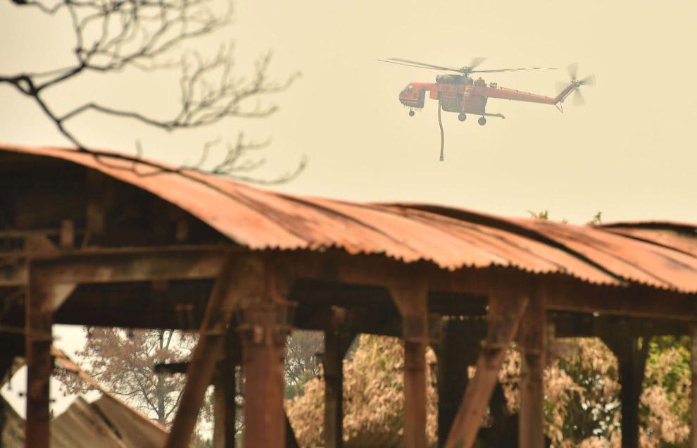 В Австралии продолжаются лесные пожары