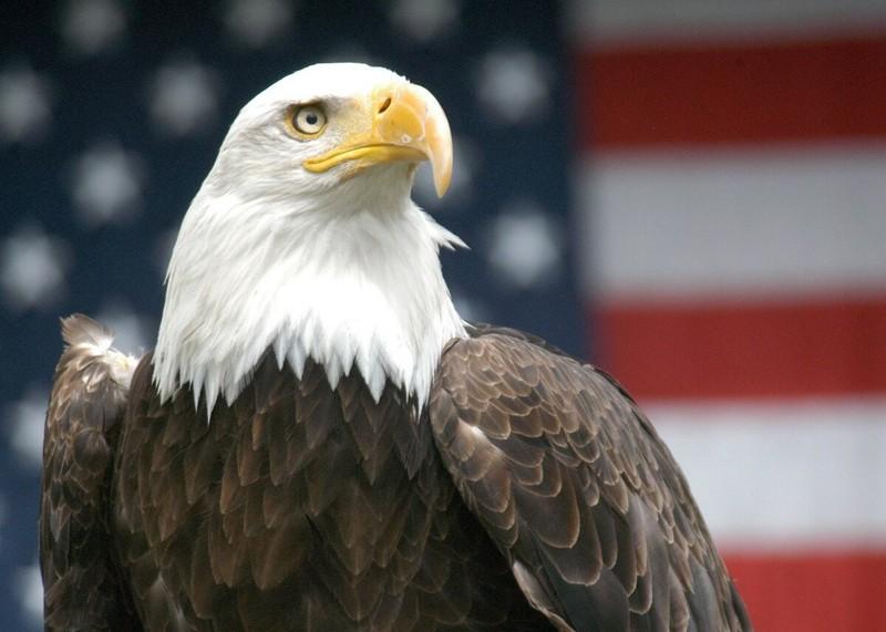 Интересные факты про Америку и её жителей