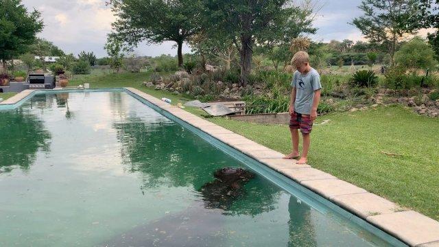 Неожиданный новогодний гость в бассейне