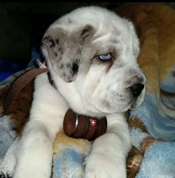 Помеси хаски с другими породами собак