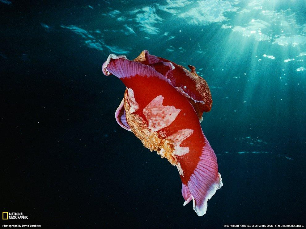 Поразительный подводный мир и его обитатели