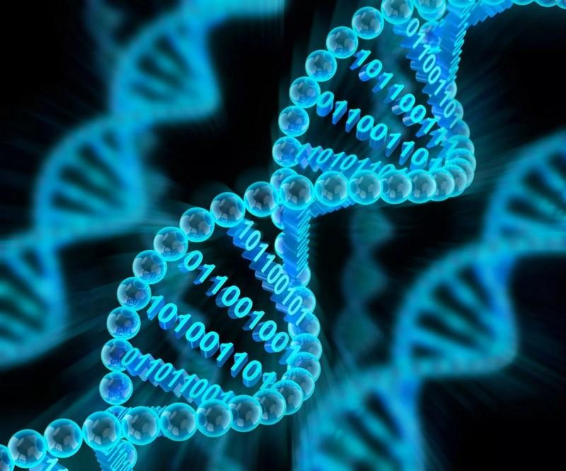 Интересные факты о молекуле ДНК и её значении в жизни человека