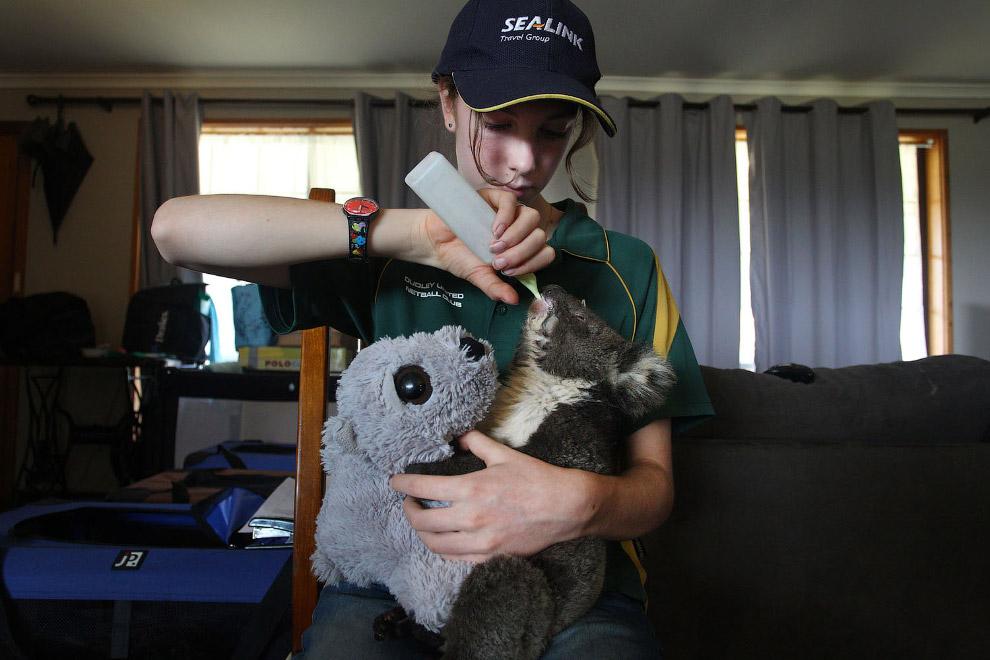 Снимки спасения пострадавших животных в Австралии