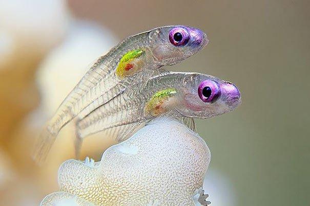 Прозрачные животные-невидимки