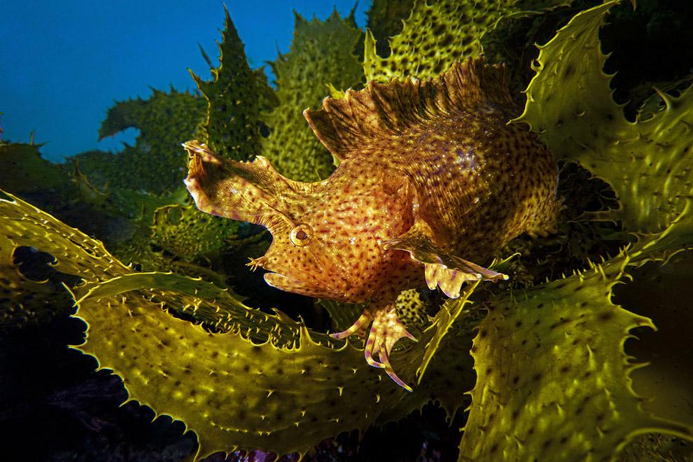 Снимки с конкура подводной фотографии Ocean Art 2019