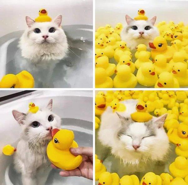 Милые животные, которые найдут лазейку в ваше сердце