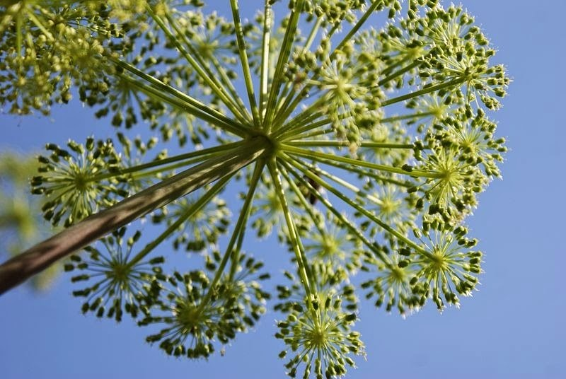 Удивительная геометрия растений