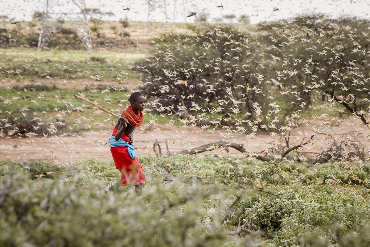 Необычное нашествие саранчи в Восточной Африке (ФОТО)