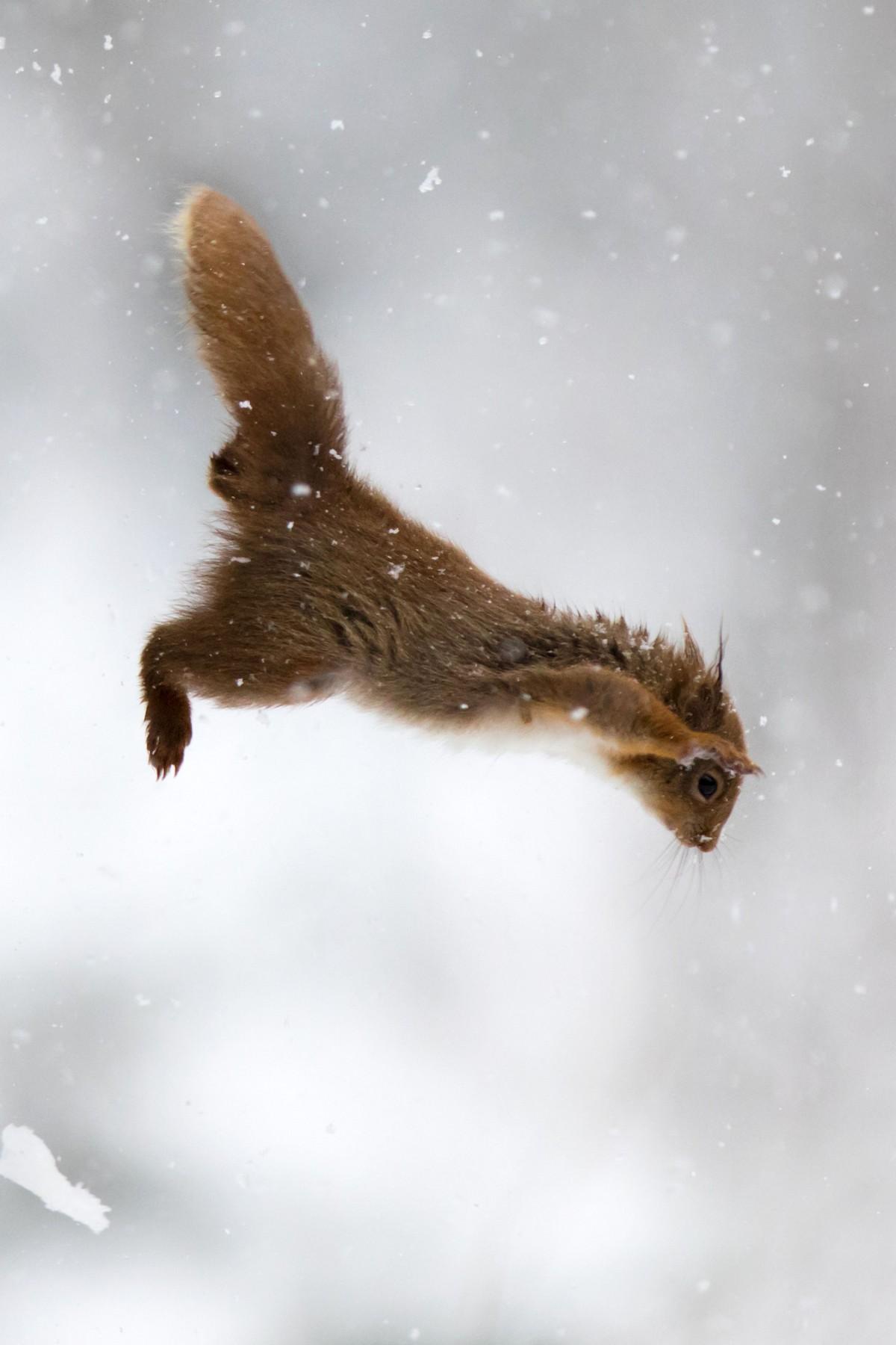 Невероятные фотографии с животными в прыжке