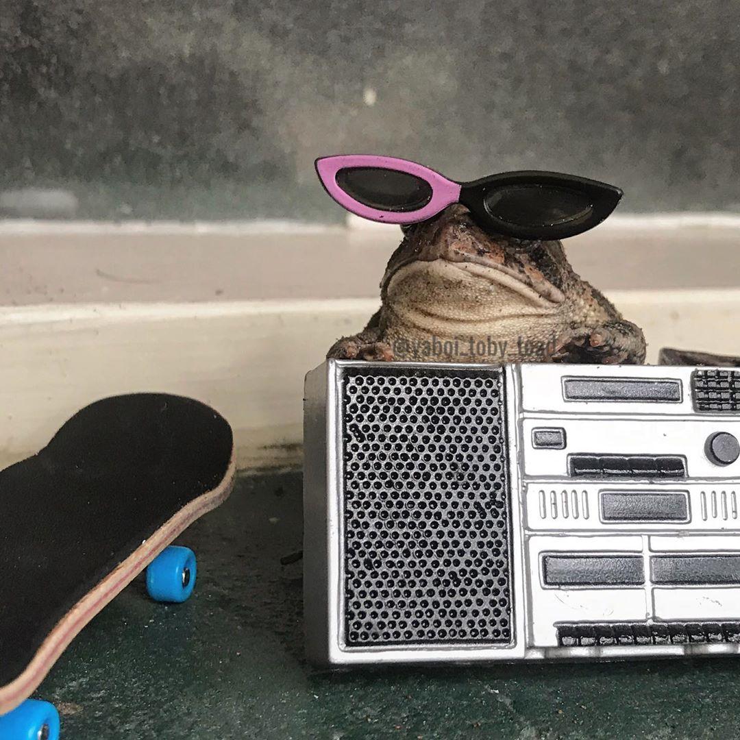 Жизнь и приключения одной жабы в Instagram
