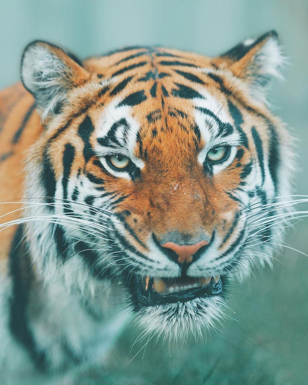 Фотографии дикой природы и животных от Шарли Савели