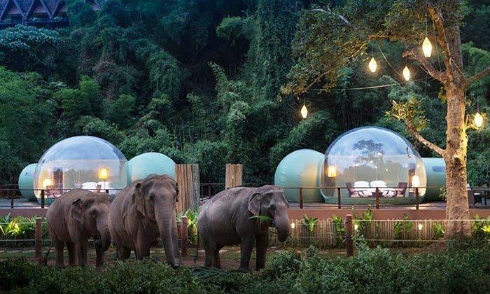 Отель с прозрачными номерами в естественной среде обитания слонов