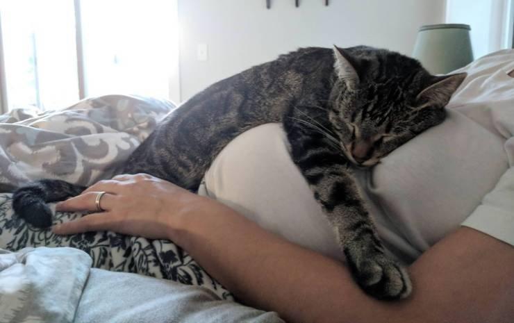 Домашние животные любят своих беременных человеческих хозяек