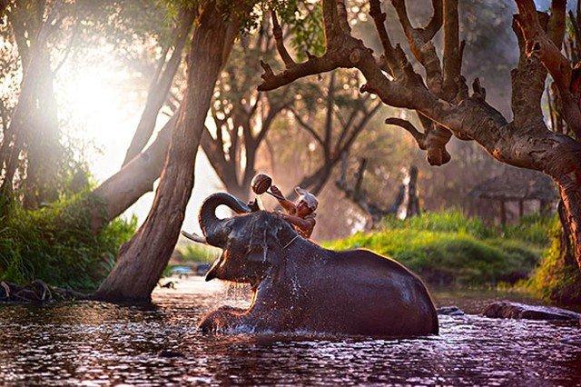 Разные животные во время купания