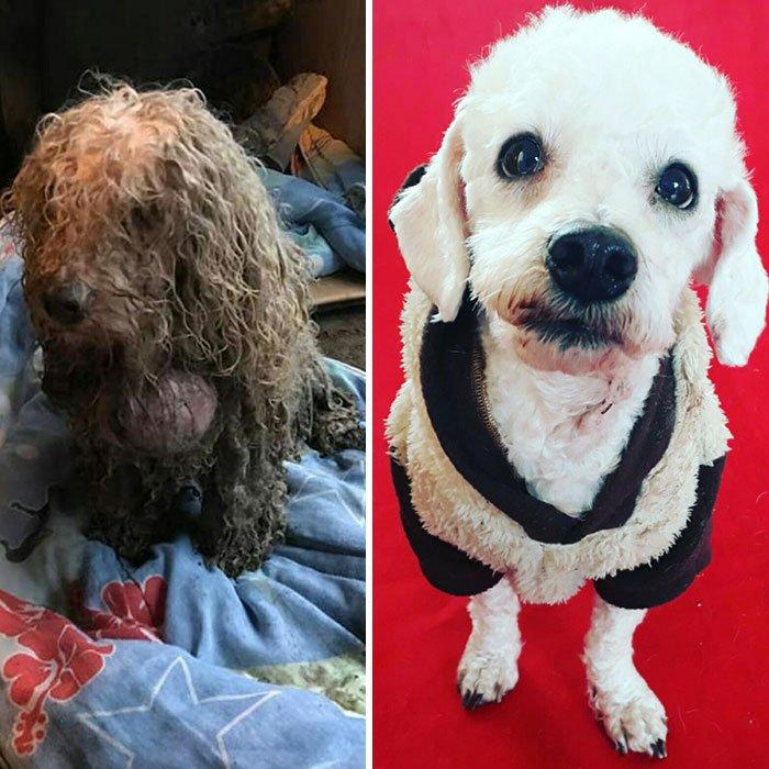 Чилиец Давид Фернандес выхаживает бездомных собак
