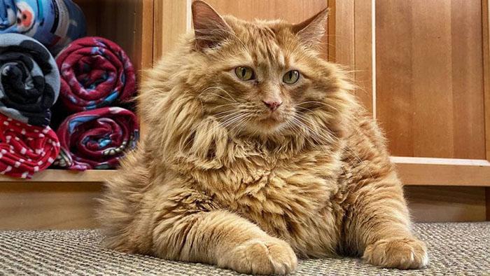История судьбы толстого кота Базуки