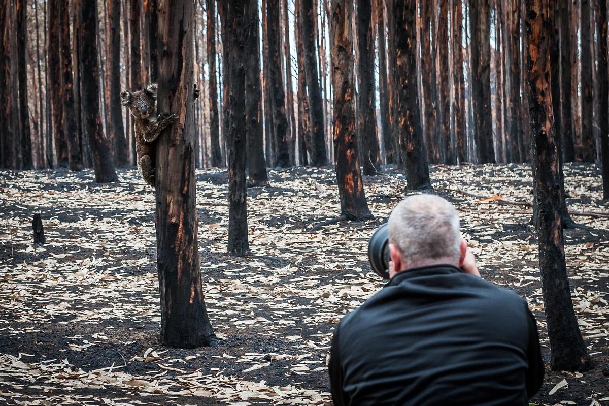 Фотограф документирует последствия пожаров в Австралии (ФОТО)