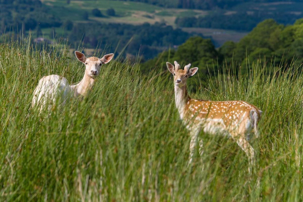 Парк дикой природы продается с лемурами, сурикатами и ламами