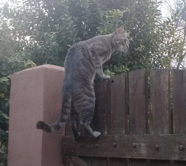 Безумные проделки от активных котиков