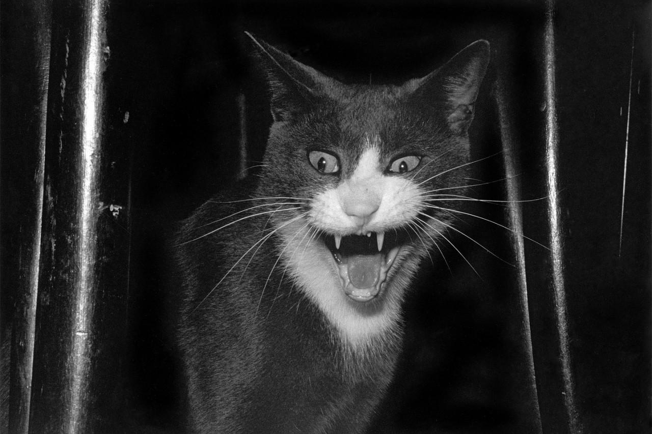 Эрни: мемуары фотографа - книга, посвященная коту