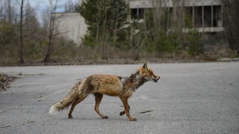 Интересные факты о городе Чернобыле и об ужасной трагедии