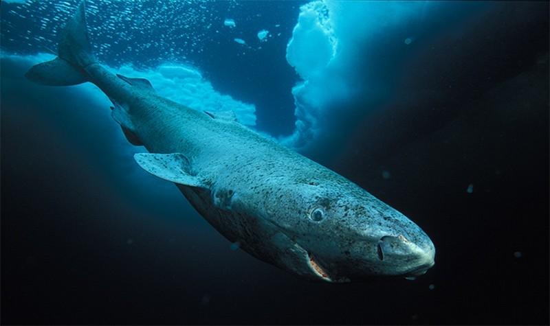 Любопытные факты об акулах