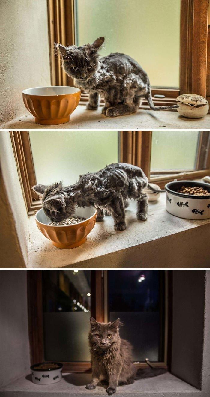 Подобранные на улице коты на снимках: до и после