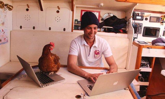 Курица - лучший товарищ в кругосветном путешествии