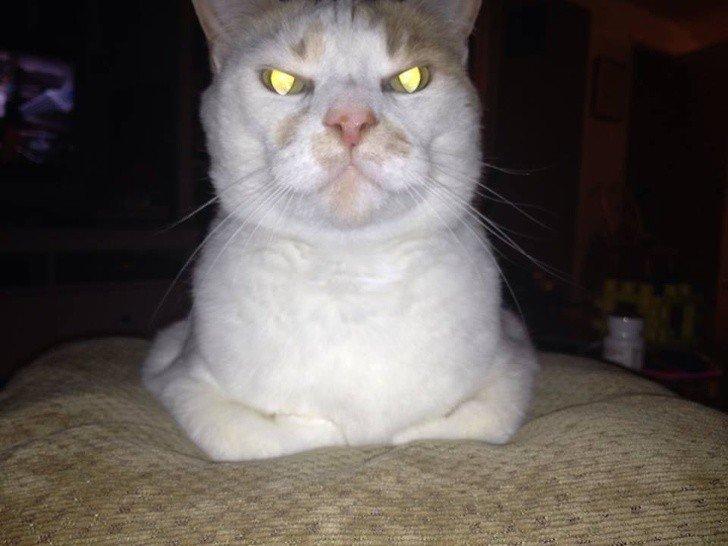 Дерзкие коты, с которыми не забалуешь