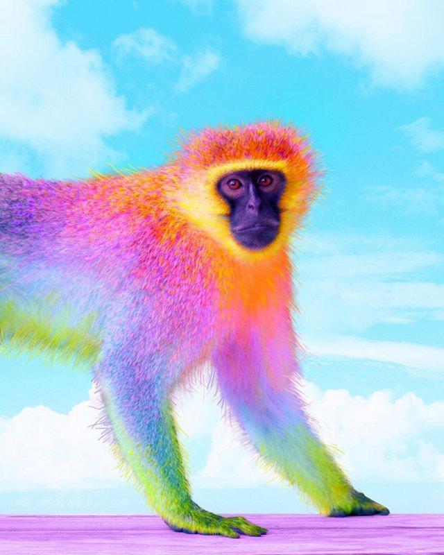 Фотографии животных в радужном цвете