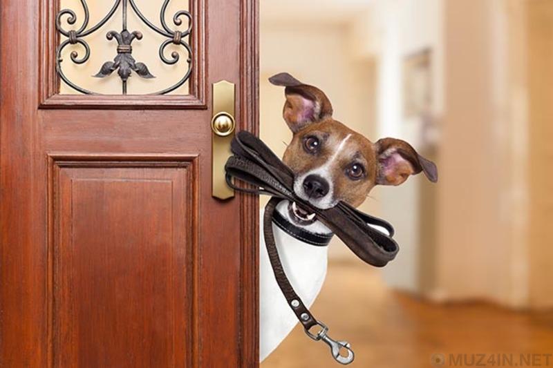 Любопытные факты об интеллекте собак