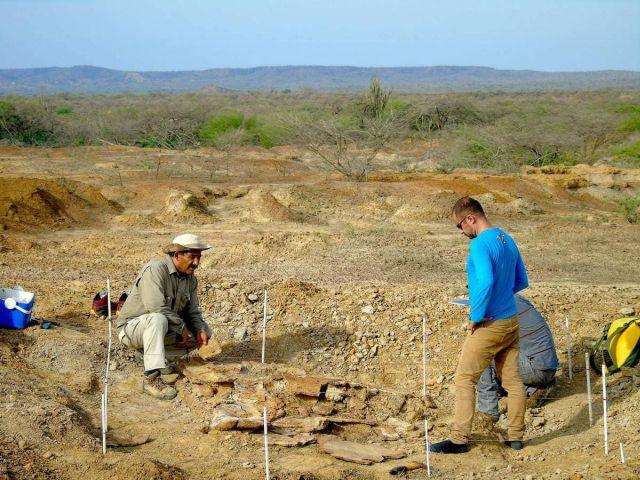 A tudósok felfedezték egy teknős maradványait, amely körülbelül 13 millió éves