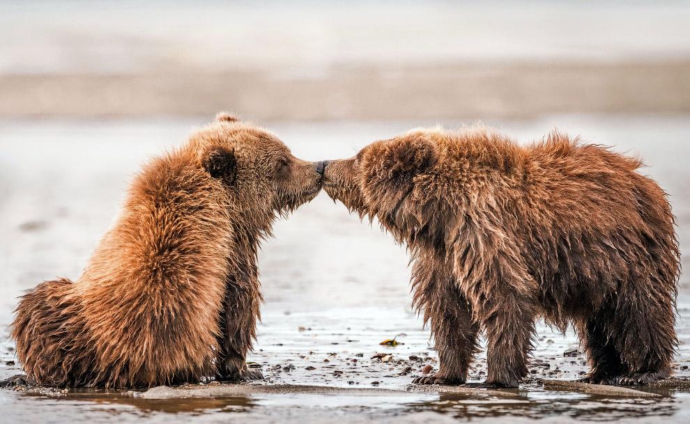 Влюбленные животные в объективе