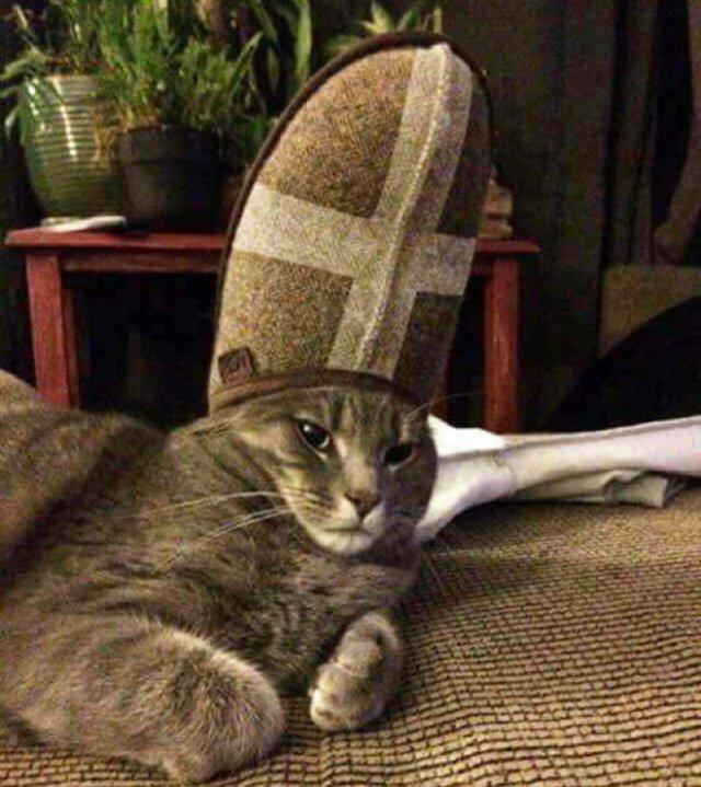 А может кошки на самом деле божества?