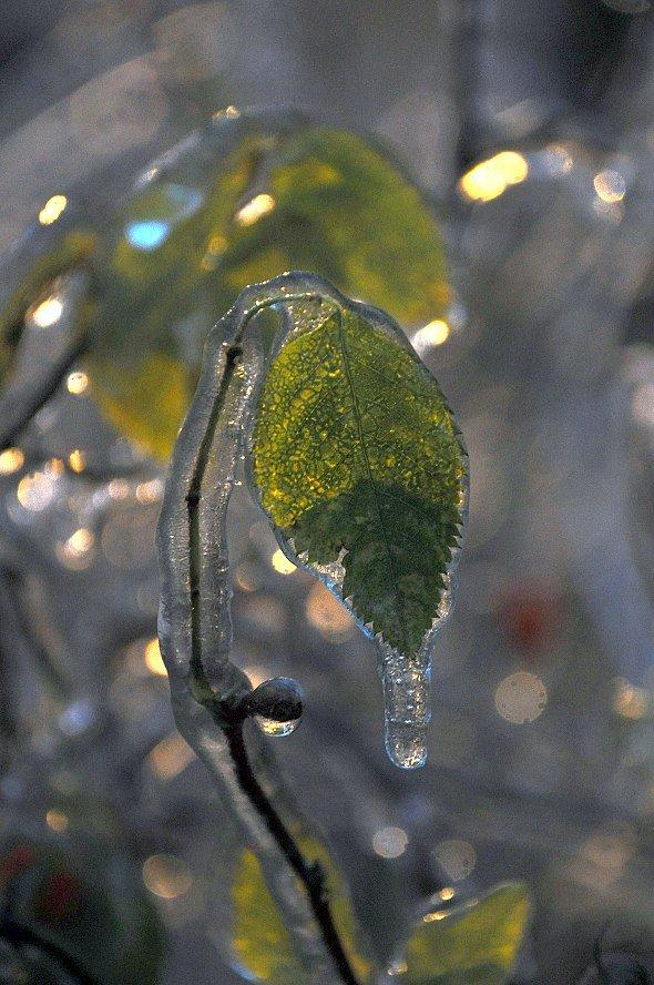 Веточки после ледяного дождя на снимках
