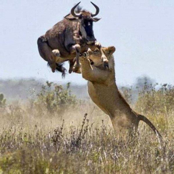 В дикой природе выживают сильнейшие