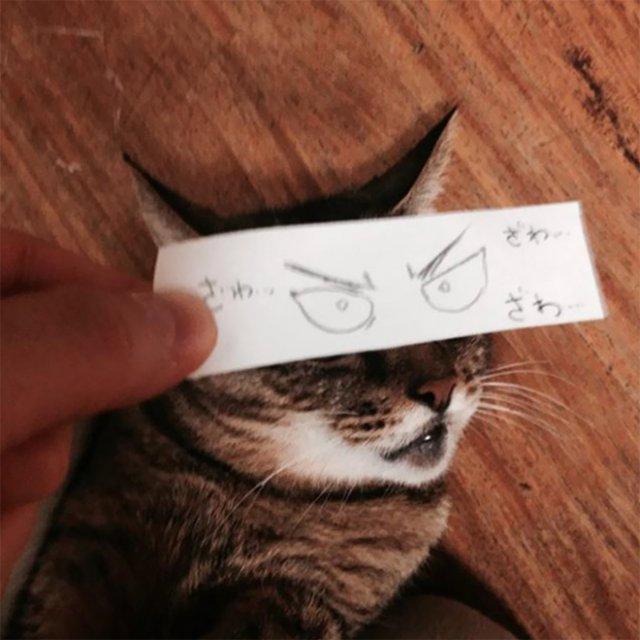 Котики с нарисованными глазами